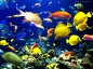 underwater fishes wallpapers copia